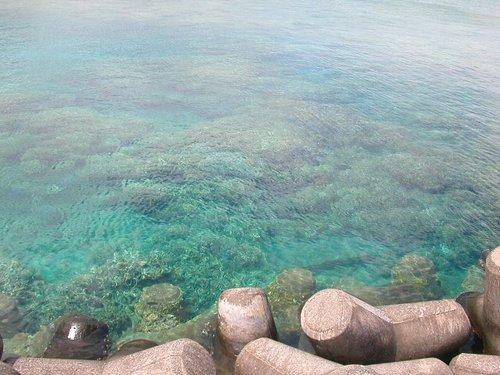 09-製氷海岸のサンゴ